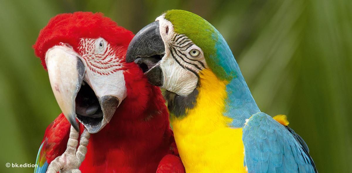 211404 – Bunte Vögel