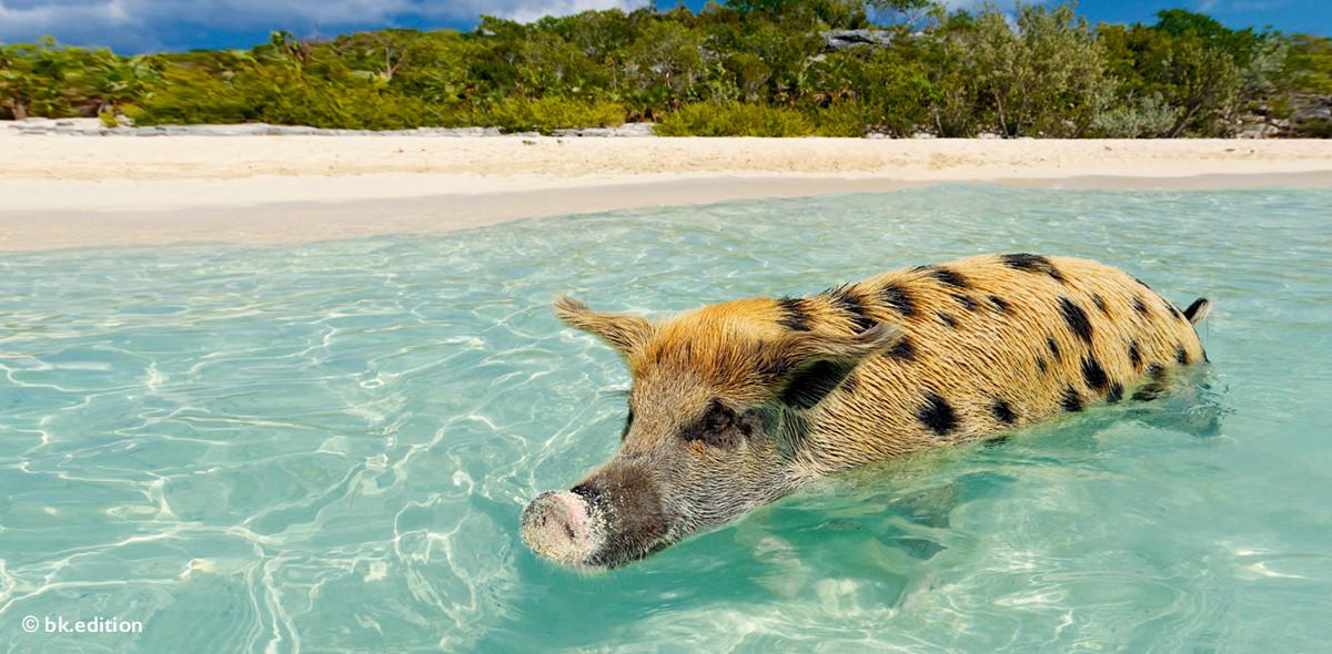 211405 – Glücksschweinchen