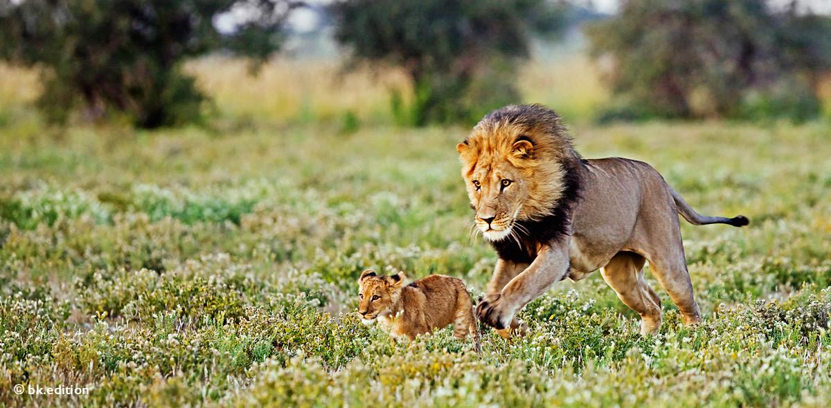 211429 – Löwen