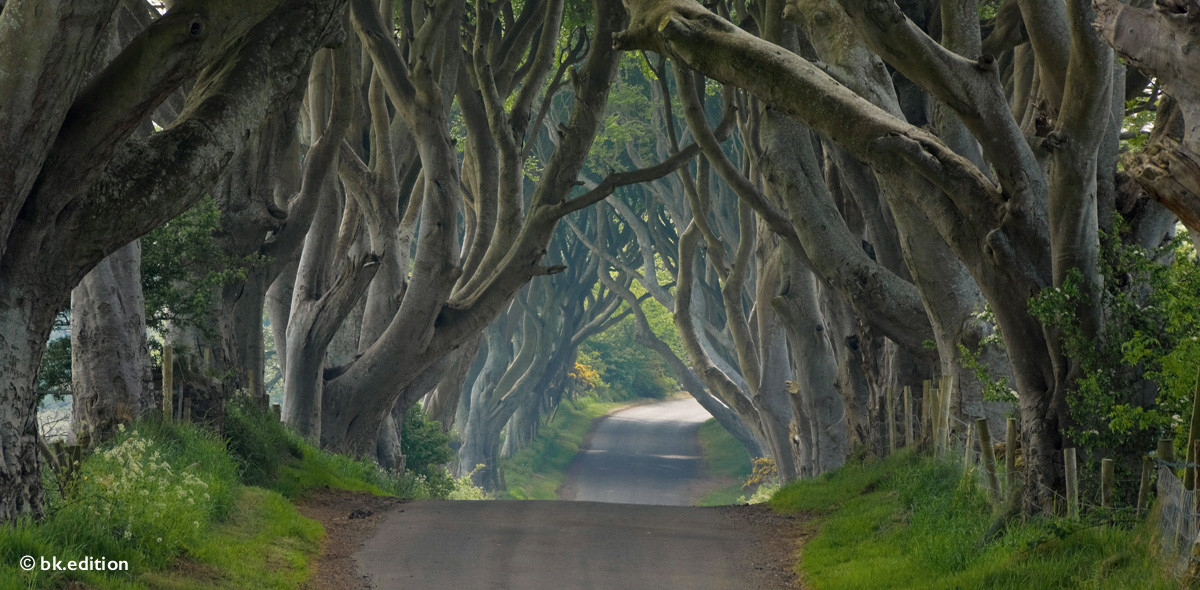 211437 – The Dark Hedges