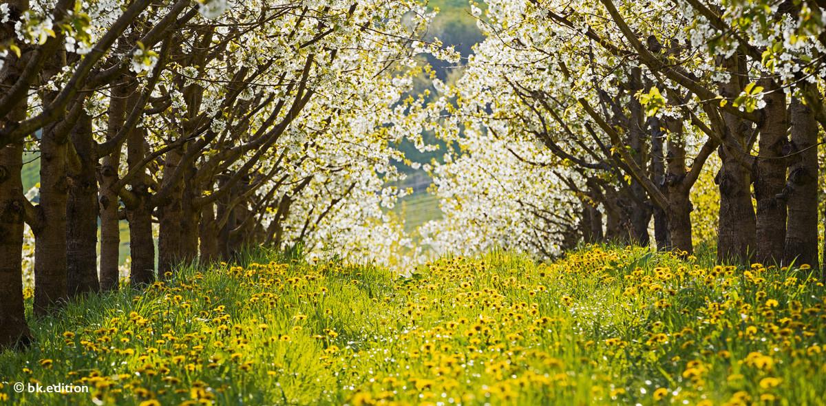 211448 – Frühlingsrausch