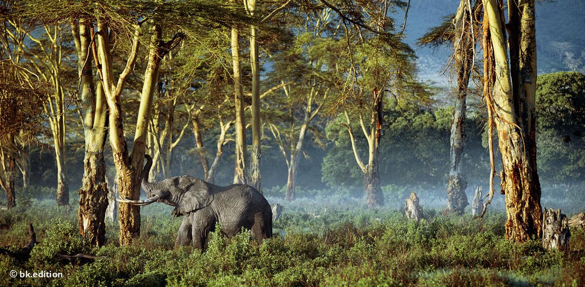 211453 – Elefanten-Imbiss