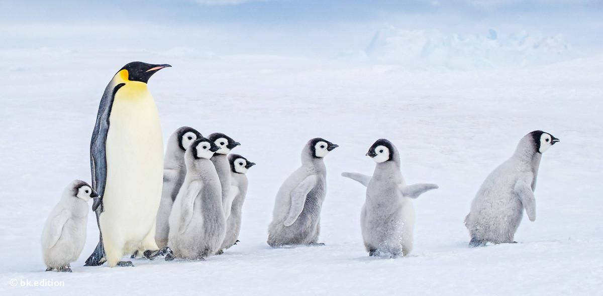 211469 – Antarktische Kita