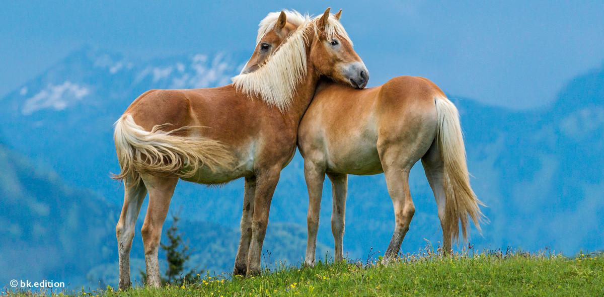 211472 – Pferdeflüstern?