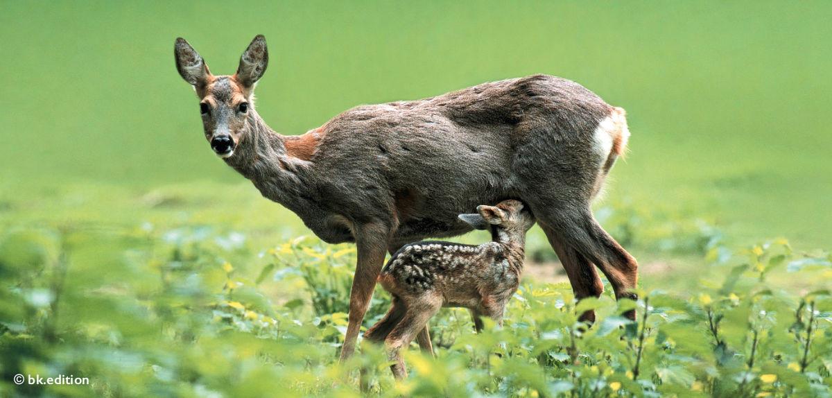 211476 – Bambi & Co.